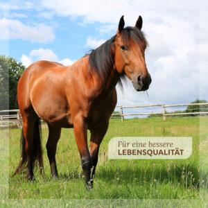 Gutes für Pferde